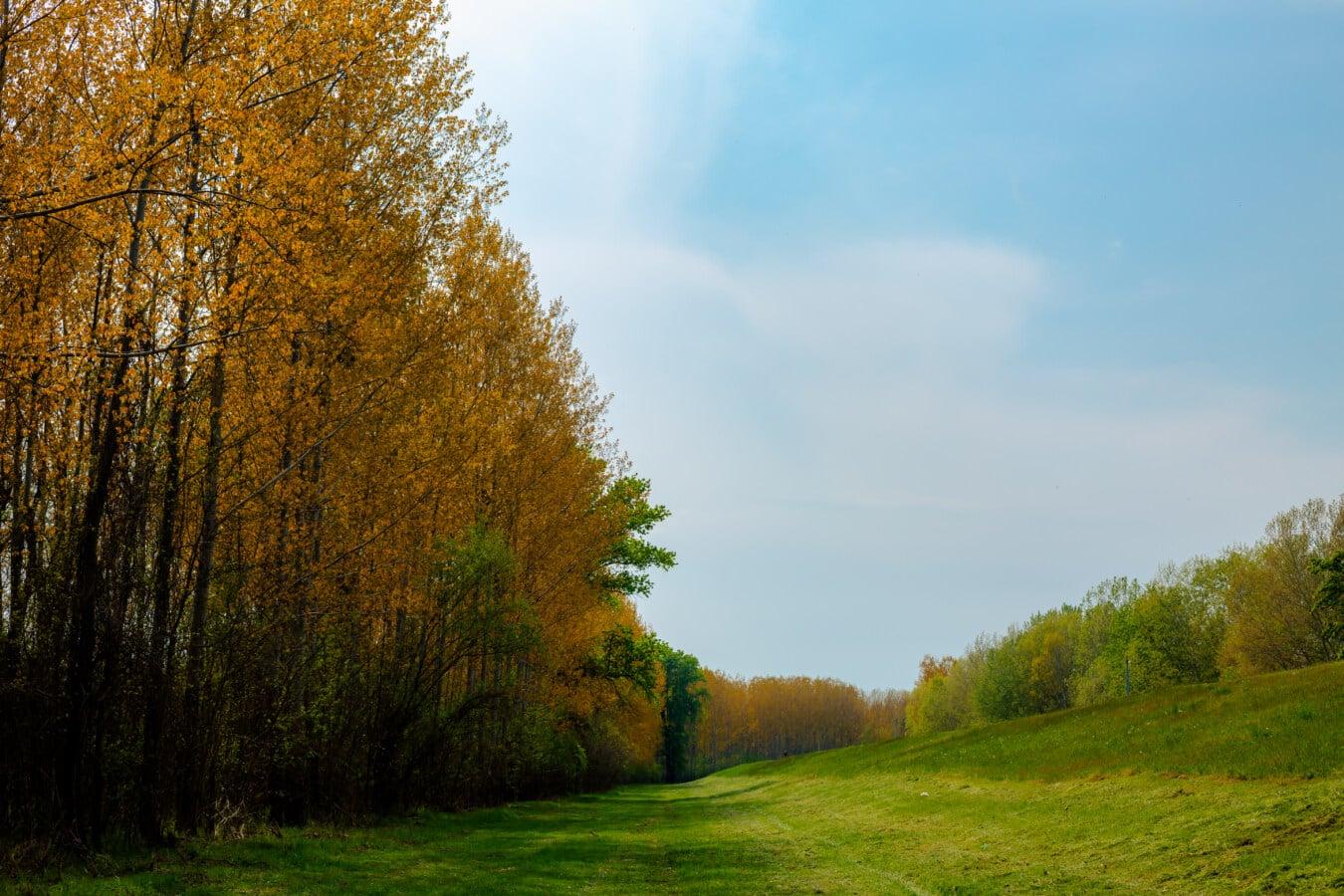 Hügel, Steigung, Hügel, Waldweg, Wald, Struktur, Landschaft, Blatt, Herbst, Gras