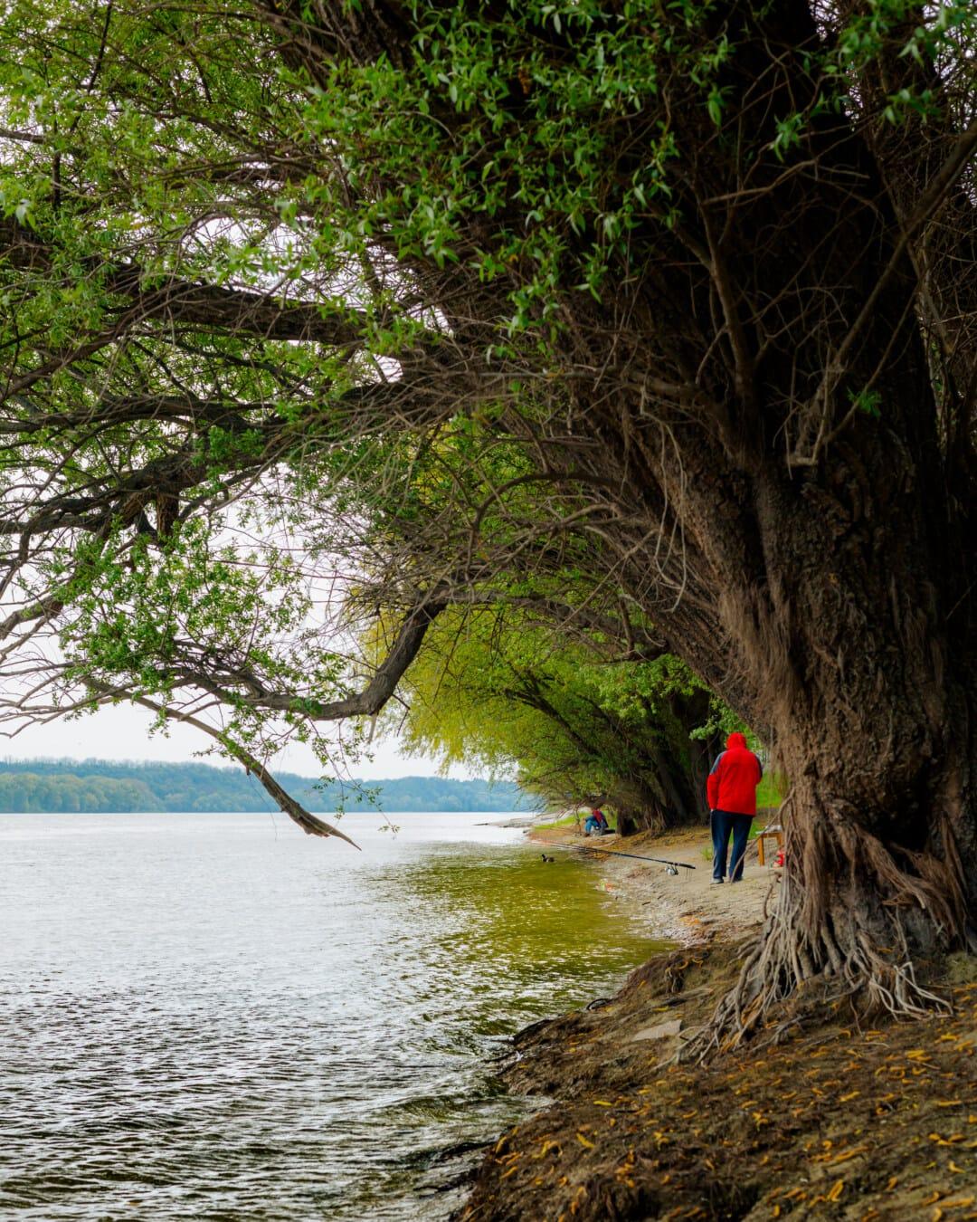 fisherman, fishing rod, fishing, riverbank, cold, wilderness, water, lake, river, landscape