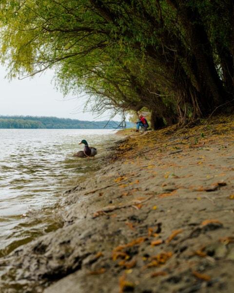 bird, duck, river, riverbank, water, beach, landscape, people, lake, nature