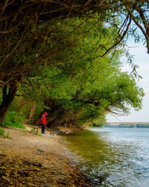 froide, météo, pêche, pêcheur, personne, berge, eau, paysage, arbre, bois
