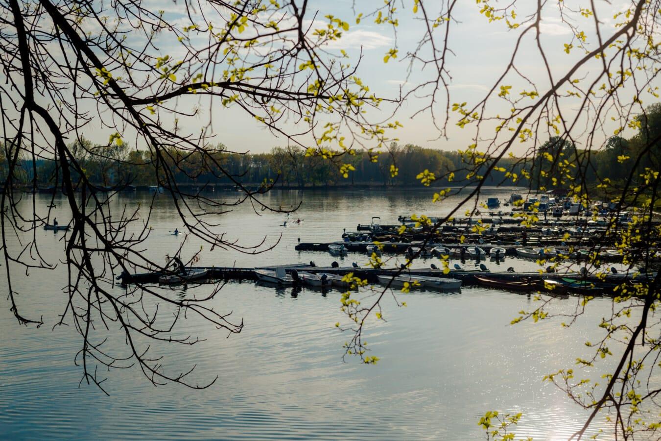 branches, au bord du lac, port, bateaux, bateau à moteur, eau, arbre, Hiver, nature, paysage