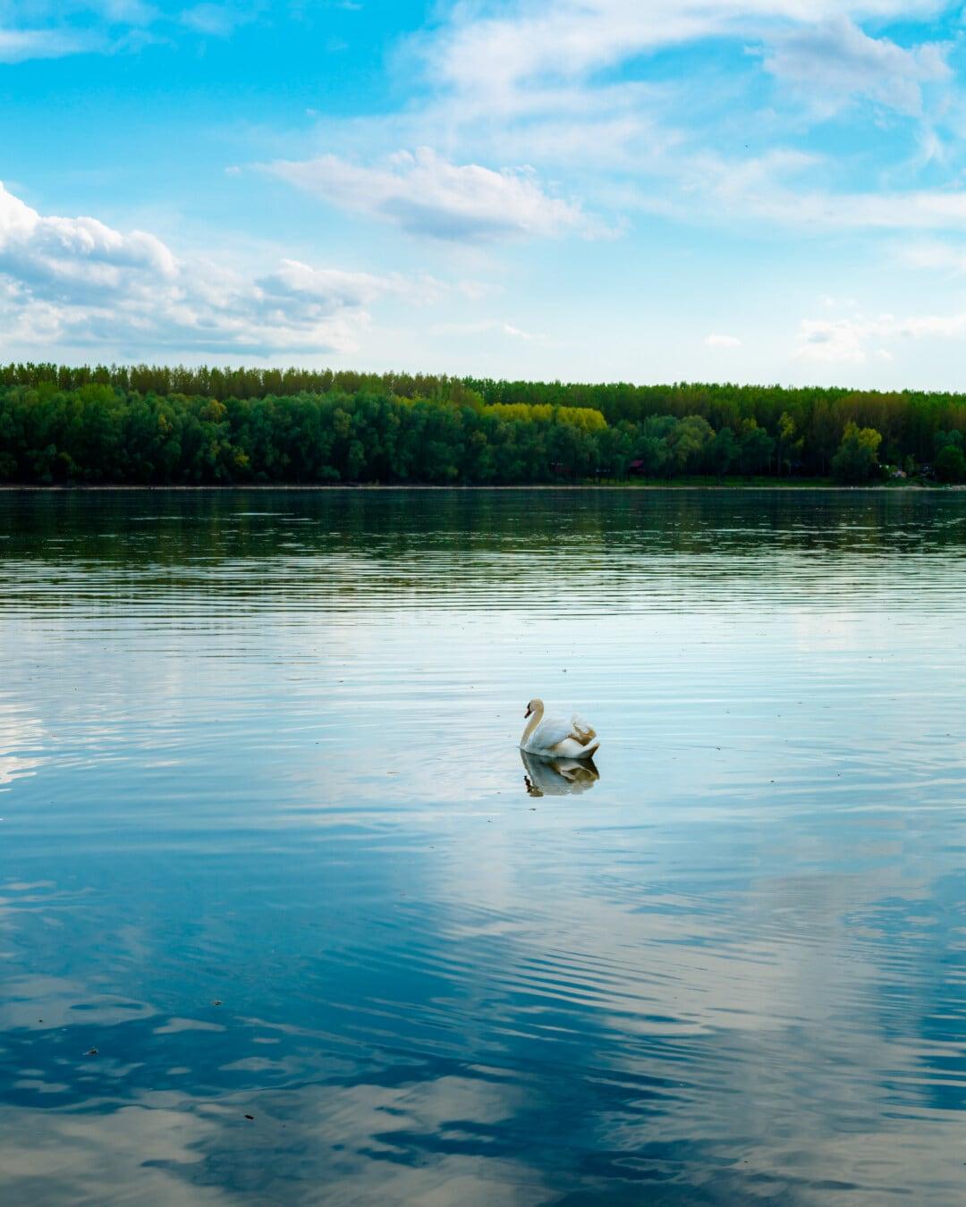 klid, atmosféra, jezera, labuť, voda, reflexe, pobřeží, jezero, řeka, příroda