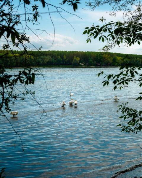 aquatic bird, reflection, nature, lake, bird, water, river, tree, landscape, summer