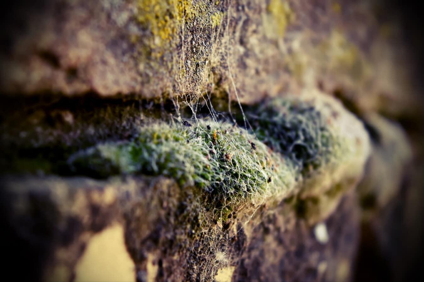 Ziegel, moosig, Flechten, aus nächster Nähe, Kraut, Organismus, Moos, Spinnennetz, Natur, Stein