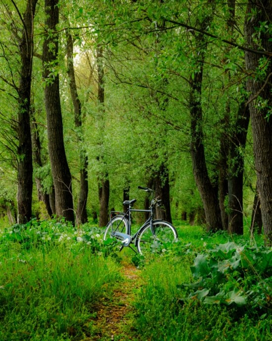 forest, greenery, bicycle, branches, landscape, trees, tree, wood, plant, nature