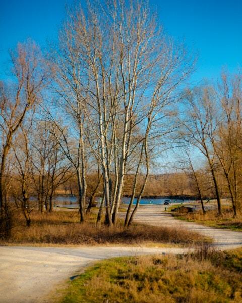 jalan, pedesaan, lereng, tepi danau, pohon, pemandangan, pohon, alam, kayu, Fajar