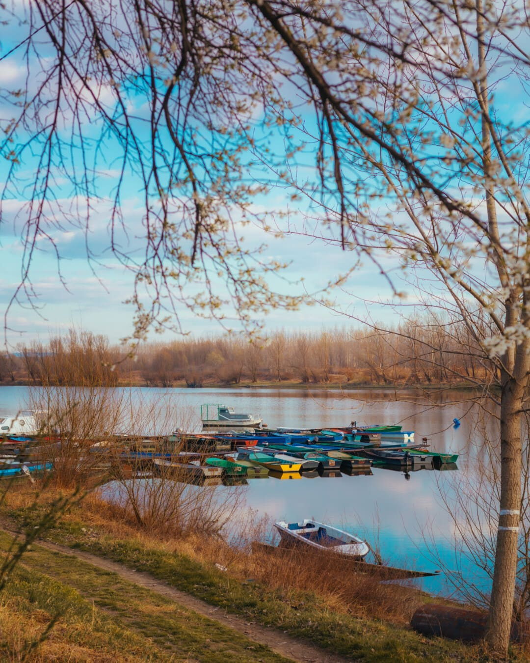 harbour, boats, atmosphere, calm, water, tree, forest, landscape, river, lake