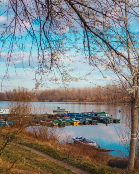 гавані, човни, атмосфера, спокій, води, дерево, ліс, краєвид, Річка, озеро