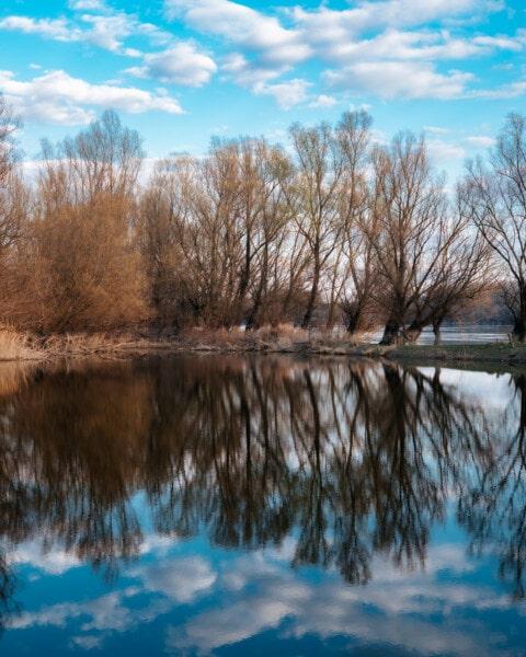 дерева, відбиття, озеро, краєвид, ліс, дерево, природа, води, деревина, Річка