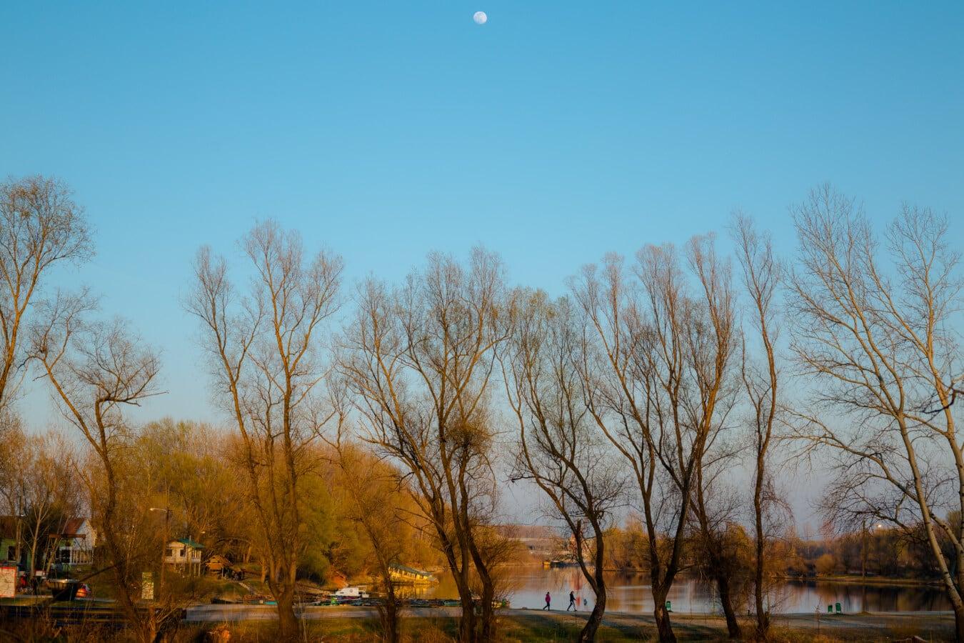 zone de villégiature, au bord du lac, Lac, paysage, atmosphère, forêt, arbres, arbre, nature, feuille