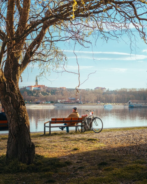 пенсіонер, люди похилого віку, людина, сидячи, лавки, берег річки, дерево, меблі, води, Річка