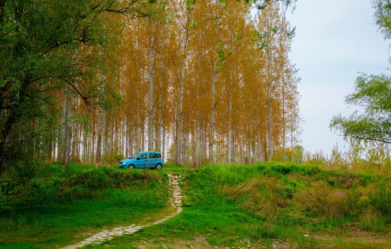 forêt, chemin forestier, voiture, peuplier, bouleau, feuille, nature, paysage, parc, bois