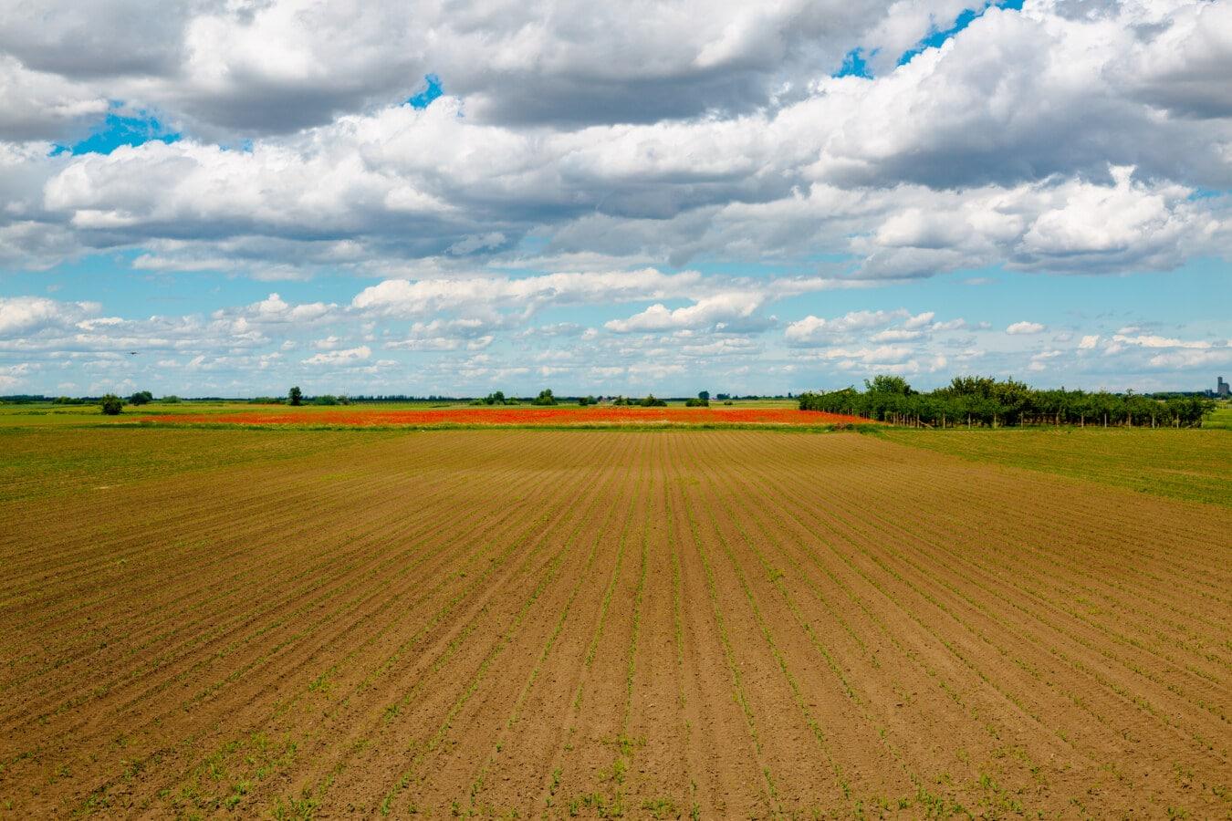 landwirtschaftlich, Feld, Frühling, Landschaft, Plain, Land, des ländlichen Raums, Wiese, Gras, Horizont