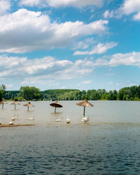 plaine d'inondation, contre les inondations, troupeau, oiseaux, cygne, plage, parasol, océan, barrière, eau