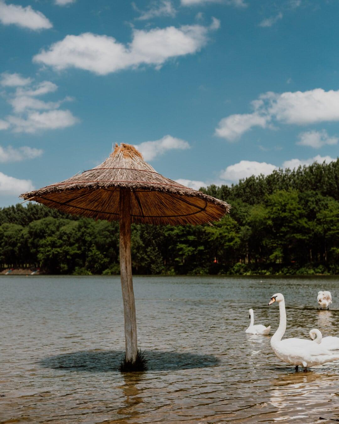 beach, floodplain, parasol, birds, swan, tropical, resort, water, sea, vacation