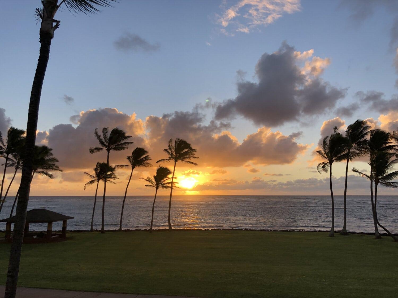 Palm, Sonnenuntergang, Strand, Kokosnuss, tropische, Bäume, Rasen, Erholungsgebiet, exotisch, Landschaft