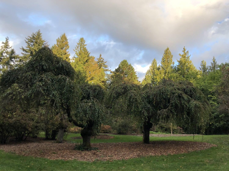 trees, garden, national park, lawn, forest, tree, landscape, plant, grass, nature