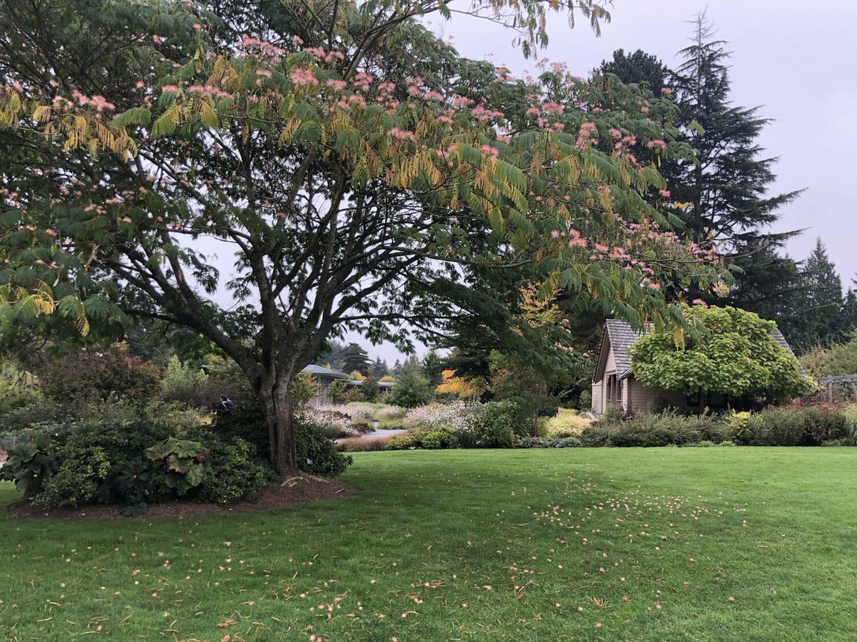 tree, lawn, cottage, grass, plant, landscape, garden, park, leaf, outdoors