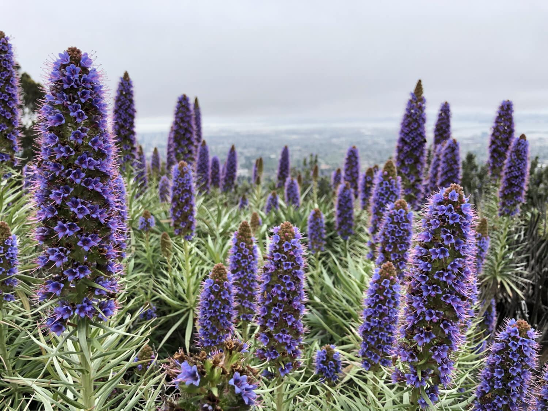 wildflower, herb, flower, plant, nature, flora, outdoors, field, blooming, leaf
