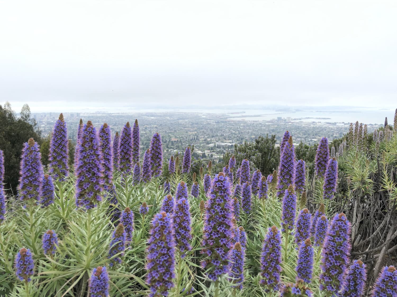 lila, Blumen, Feld, Anlage, Blume, Natur, im freien, Landschaft, Flora, Sommer