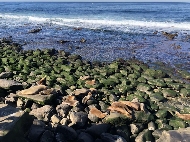 animaux, océan, littoral, lion de mer, paysage, structure, côte, plage, mer, bord de mer