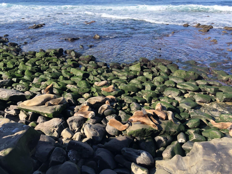 animals, sea lion, coast, sea, structure, water, rock, landscape, ocean, beach