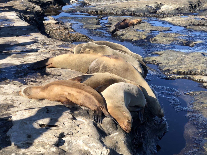 animals, sea lion, big rocks, coastline, water, seal, beach, ocean, sea, seashore