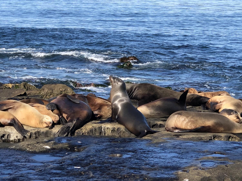 lion de mer, littoral, océan, vagues, faune, habitat naturel, animaux, plage, eau, mer