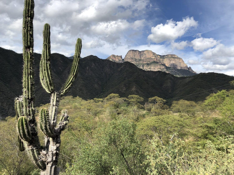 déserts, plantes du désert, Cactus, paysage, plante, montagne, nature, nature sauvage, arbre, Roche