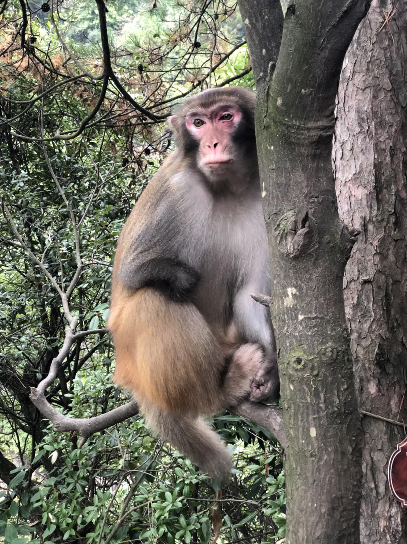 singe, macaque, portrait, arbre, assis, nature, sauvage, faune, animal, primate