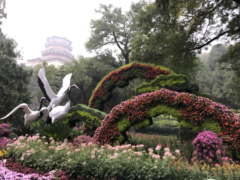 Japan, Garten, Formschnitt, schöne Blumen, Skulptur, Vögel, Blume, Struktur, Park, Hecke