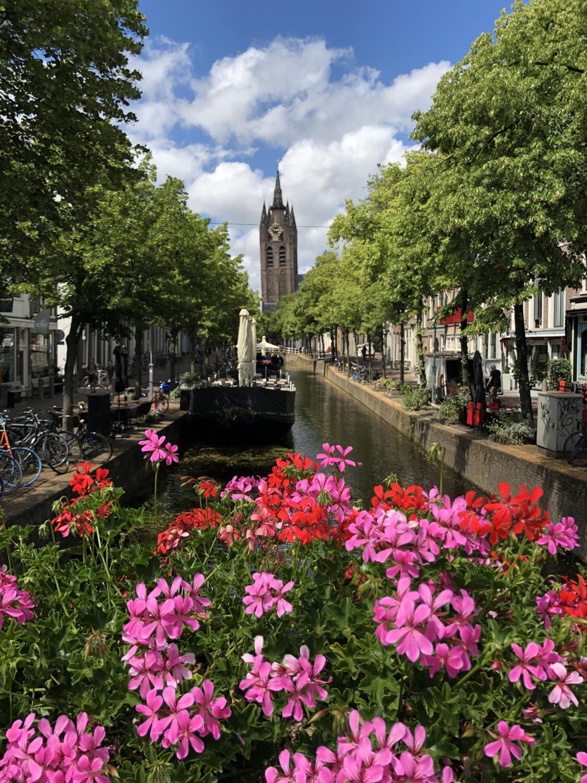 l'Europe, Centre ville, paysage urbain, rue, historique, fleurs, cimetière, fleur, jardin, architecture