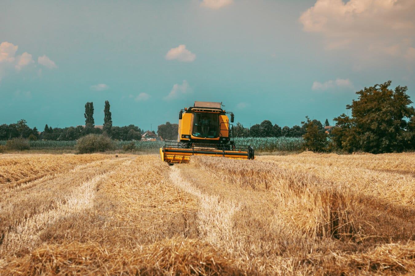 vete, Wheatfield, maskin, skördare, industriella, fältet, halm, landsbygdens, spannmål, jordbruk