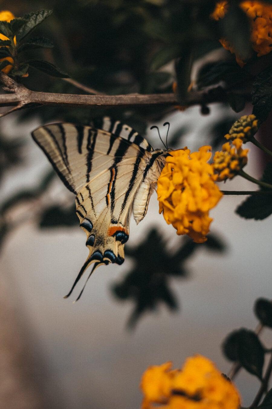 alas, mariposa, colorido, contacto directo, flor de mariposa, insectos, flora y fauna, flor, invertebrado, hoja