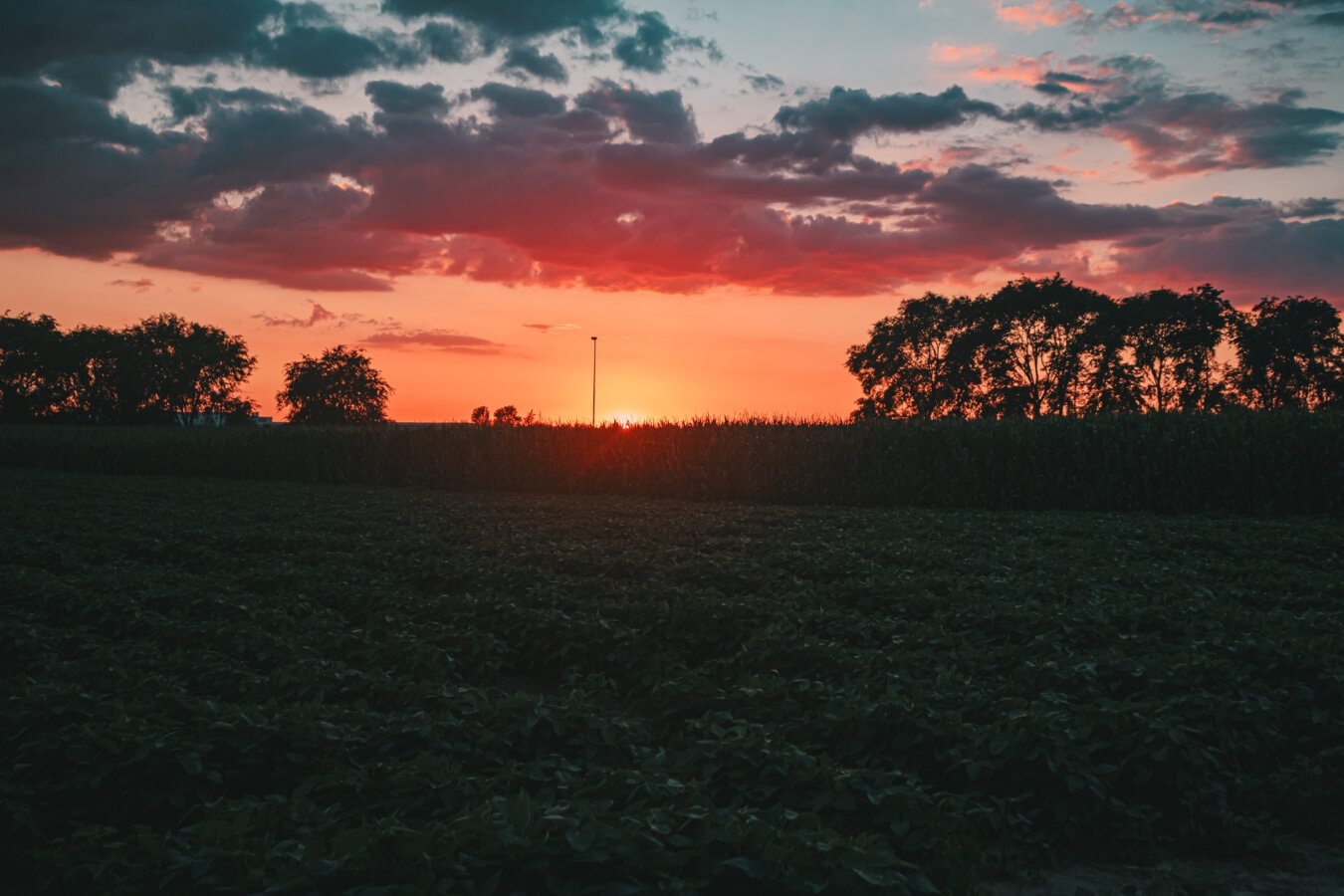 sinar matahari, matahari terbit, bidang, pertanian, ladang jagung, suasana, tenang, tenang, bintang, Fajar