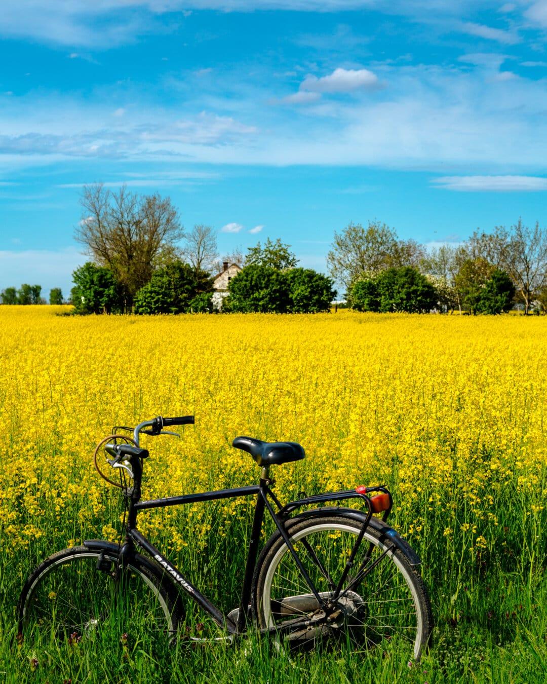 自転車, 農業, フィールド, 菜の花, シード, 農村, 草原, ランドス ケープ, ファーム, 自然