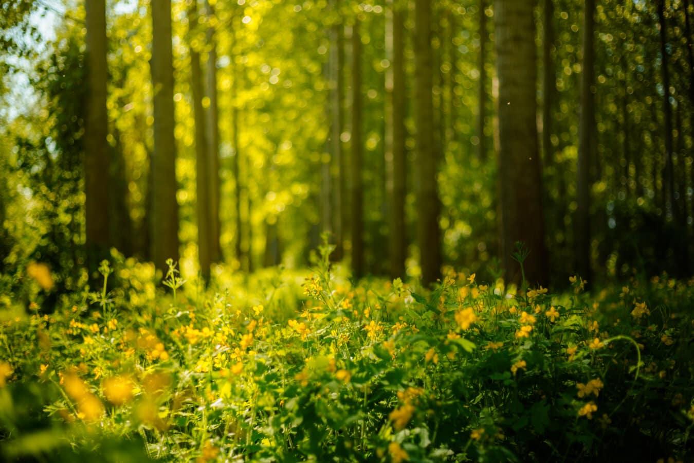 sonnig, Sonnenlicht, Grün, Wald, Kraut, gelb, Feld, des ländlichen Raums, Anlage, Frühling