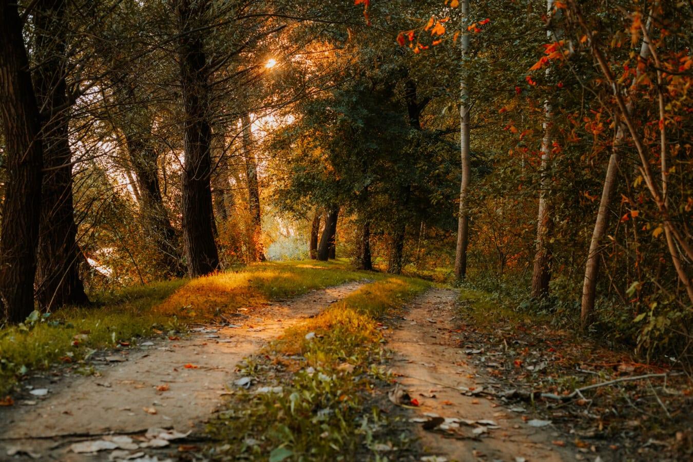 görkemli, orman yolu, yapraklara, güzel fotoğraf, manzara, yol, park, orman, yaprak, ağaç