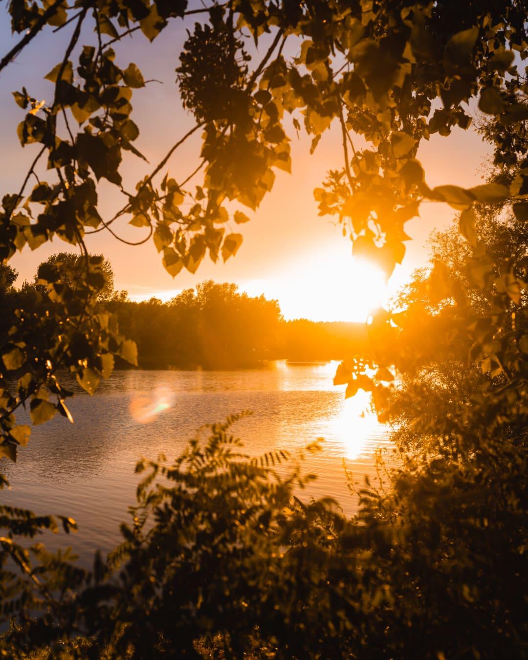 яркость, саншайн, солнечных пятен, берег реки, река, лучи солнца, солнечный свет, закат, деревья, филиалы
