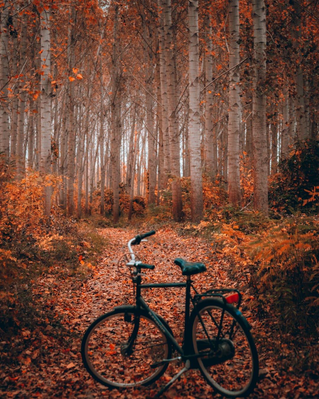 Waldweg, Herbstsaison, Fahrrad, Waldweg, Rad, Wald, Holz, Struktur, Fahrrad, Blatt