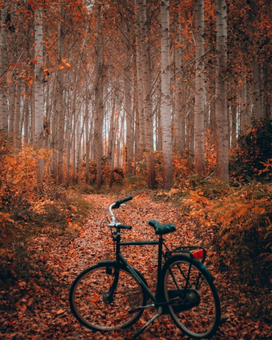 forest trail, autumn season, bicycle, forest path, wheel, forest, wood, tree, bike, leaf