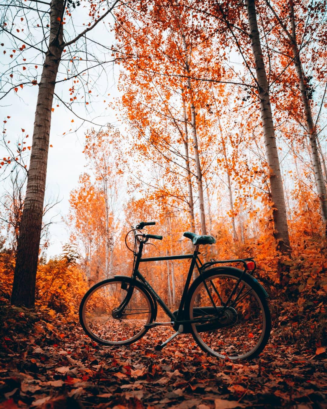 sentier de la forêt, vélo, forêt, saison de l'automne, bois, véhicule, feuille, arbre, vélo, Itinéraire