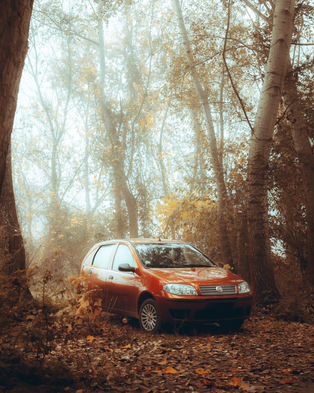 秋天季节, 汽车, 森林, 明亮, 树, 阳光, 桦, 路, 树, 景观