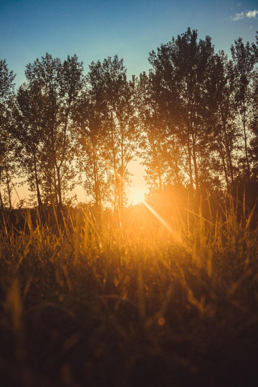 Съншайн, Слънчев, Светлината на слънцето, слънце, слънчевите лъчи, дървета, тревни растения, светъл, светлина, подсветка