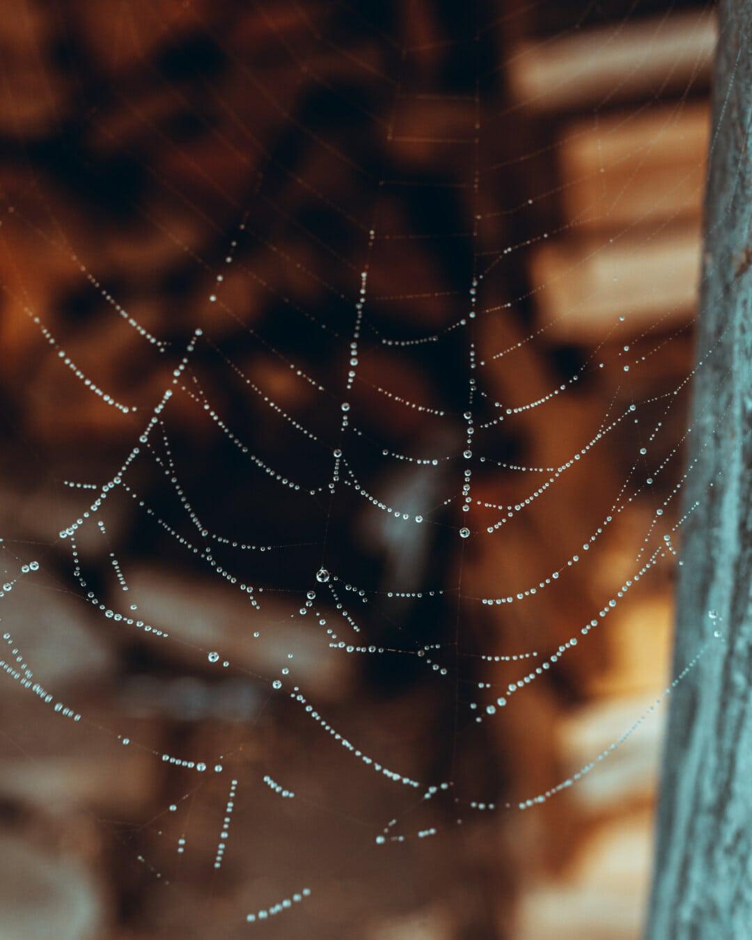 moisture, wet, spiderweb, close-up, dew, cobweb, trap, spider, spider web, shining