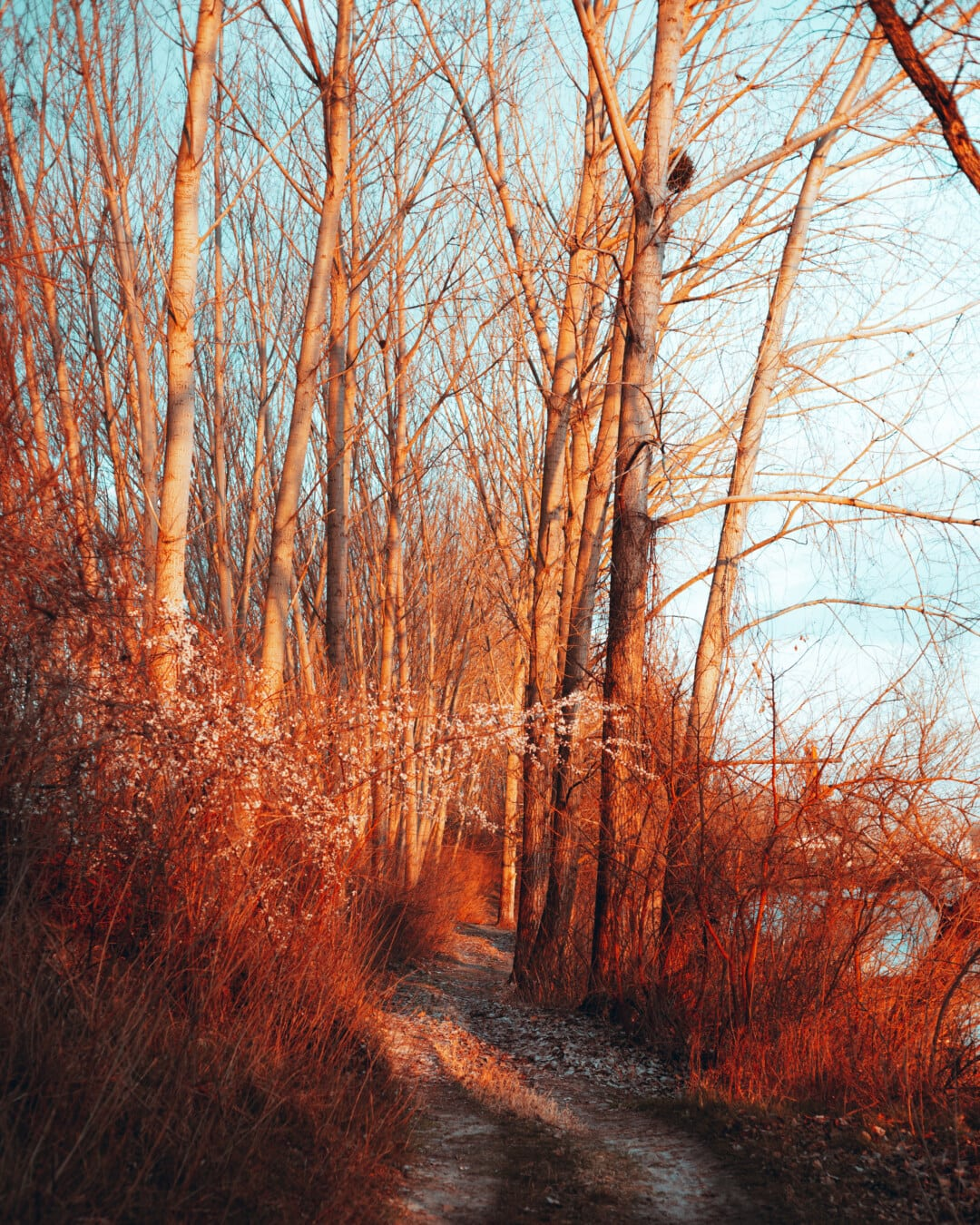 willow, autumn season, forest, forest path, shrub, wood, trees, tree, nature, landscape