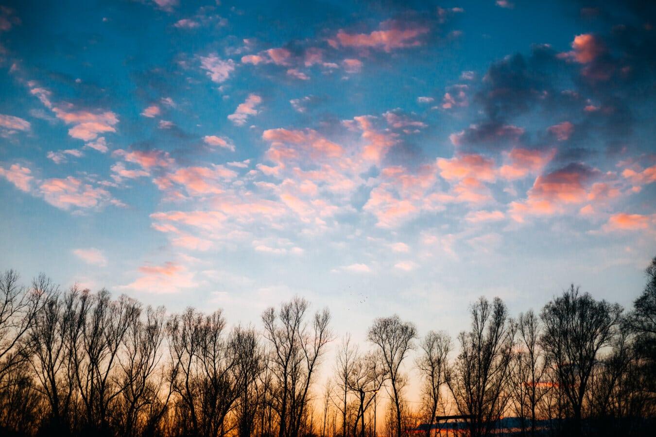 黄昏, 黄昏, 天空发光, 性质, 雄伟, 气氛, 太阳, 云, 日落, 黎明