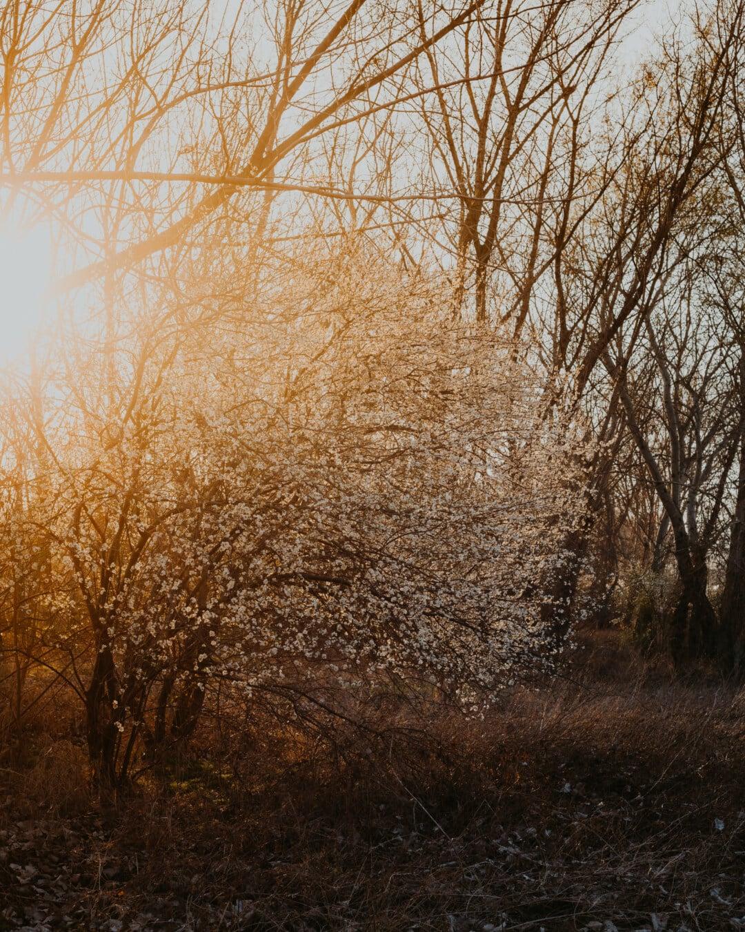 пролетно време, ден, Слънчев, Съншайн, слънчевите лъчи, дърво, пейзаж, гора, бреза, дървета