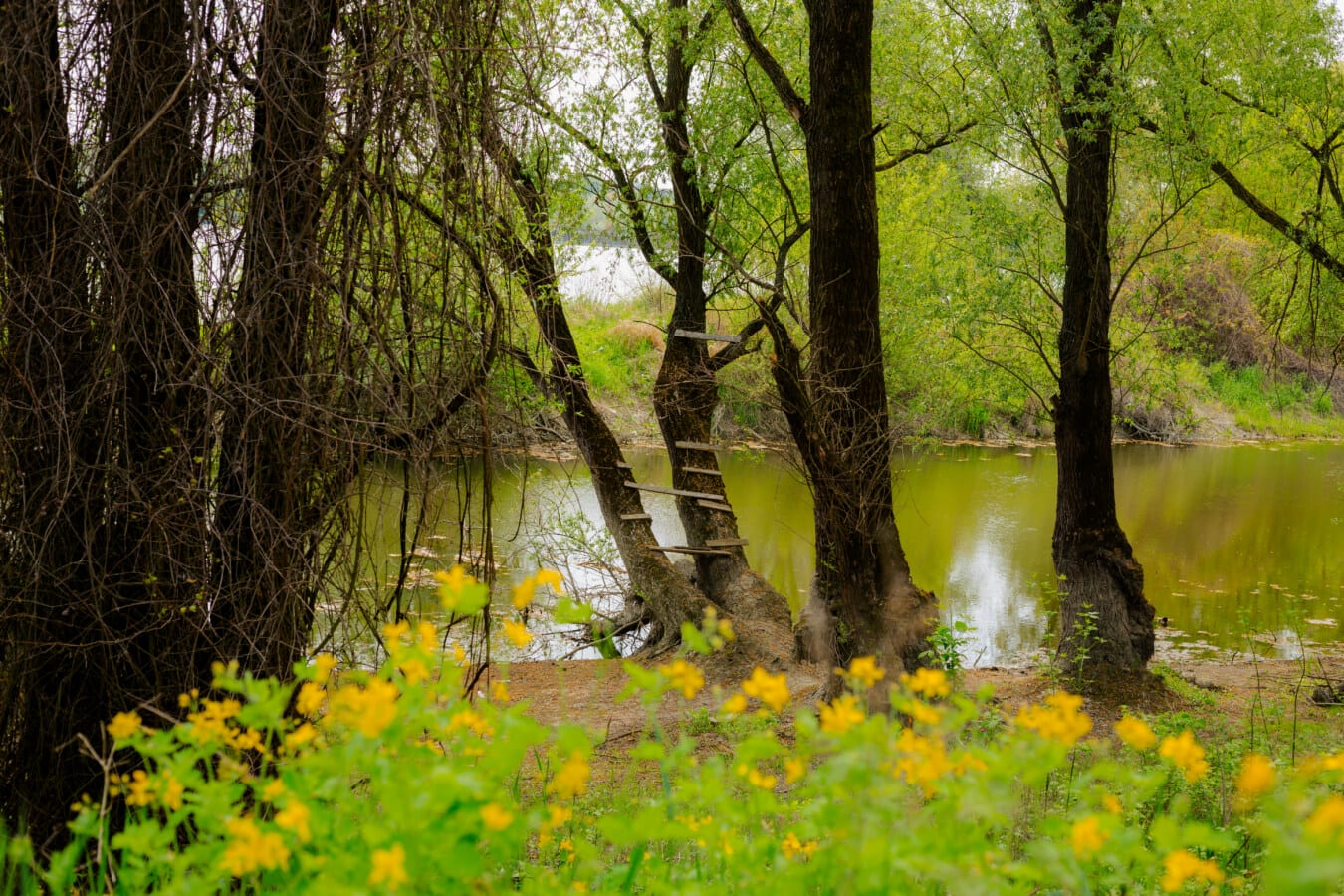 Bäume, Flussufer, Wald, Gras, Struktur, Herbst, Holz, Natur, Birke, Park