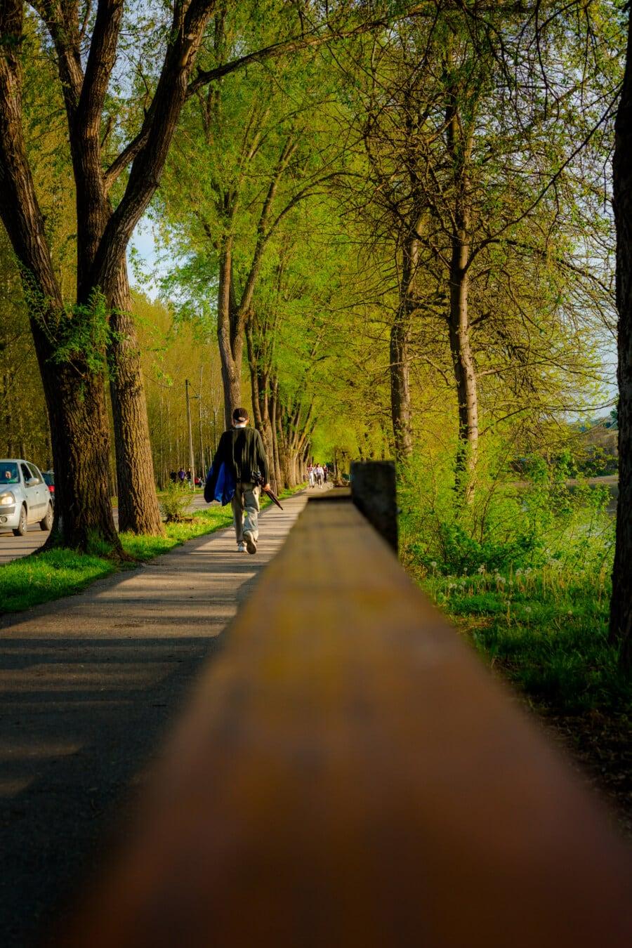 ruelle, pensionné, marche, trottoir, clôture, forêt, arbres, Itinéraire, paysage, parc
